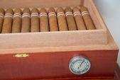 Cuban cigar and humidifier — ストック写真
