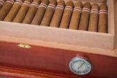 Umidificador e charuto cubano — Fotografia Stock