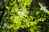 Sun shining into forest, low angle view — Stock Photo
