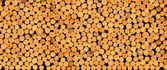 Stacked timber logs — Stock Photo