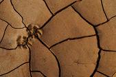 Dry cracked earth, desert — Stock Photo