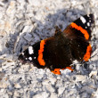 The beautiful red admiral butterfly — Stock Photo