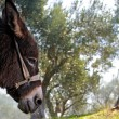 Donkey and olive tree — Stockfoto #24315525