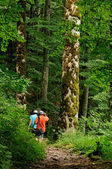 Hiking in the virgin forest — Stock Photo