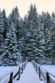 Bridge in the forest in the winter — Stock Photo