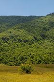 Луг с холма и небо на заднем плане — Стоковое фото