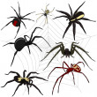 Spiders set — Stock Vector