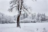 Frozen lake — Stock Photo