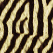 Seamless texture of zebra — Photo #15687649