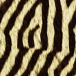 Seamless texture of zebra — стоковое фото #15687649