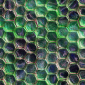 Seamless Texture snakeskin — Stock Photo