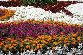 Bed of flowers — Stock Photo