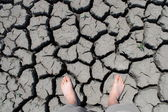 Walk drought cracks — 图库照片