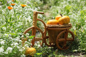 Pumpkins in the woven basket in the form of bicycle — Stock Photo