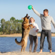 Pregnant woman and man playing ball with dog — Stock Photo