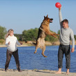 Pregnant woman and man playing ball with  dog - Stock Photo