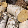 Stock Photo: Billet of firewood.