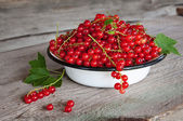 Red currants. — Stock Photo