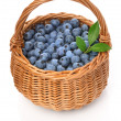 Blueberries in a basket — Stock Photo #16343345