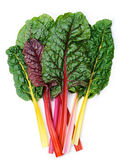 Swiss chard Rainbow — Stock Photo