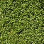 Green grass — Stock Photo #3474381