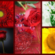 Beautiful set of flowers - Stock Photo