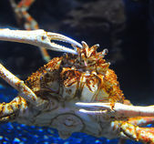 Hermit Crab on sea sunny beaches — Stock Photo