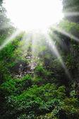 Solljus i skogen. — Stockfoto