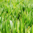 Green grass on the lawn — 图库照片