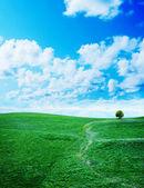 Green grass against a blue sunny sky — Stock Photo