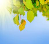 Grüne blatt an einem baum — Stockfoto