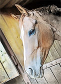 Horse in the window — Stock Photo