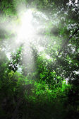 Sunlight in the forest. — Stock Photo