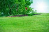 Clube de golfe. campo verde e bola na grama — Fotografia Stock