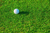 Golf club. Green field and ball in grass — Stock Photo