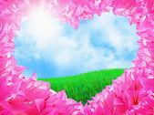 Bela flor — Foto Stock