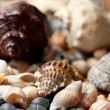 Stock Photo: Variety of seashells