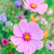 Stock Photo: Summer flowers in the garden