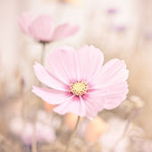 Flowers in pastel colors — Stock Photo