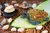 Spa stones, seashells and turtle. — Stock Photo