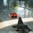 """Show of crocodiles"" in Thailand — Stock Photo"