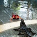 """Show of crocodiles"" in Thailand — Stock Photo"