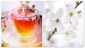 Herbal tea and flowers of the cherry — Stock Photo
