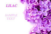 Lilac branch with sample text — Stock Photo