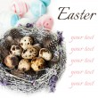 Stock Photo: Easter eggs in the nest