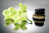 Spa stones and green orchid with water drops — Stock Photo