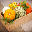 Pumpkins in a wooden box in a rustic style — Stock Photo