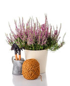 Heather flowers in a pot and garden tools — Stok fotoğraf