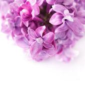 τα ιώδη λουλούδια — Φωτογραφία Αρχείου