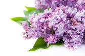 Floral background lilac flowers — Foto Stock